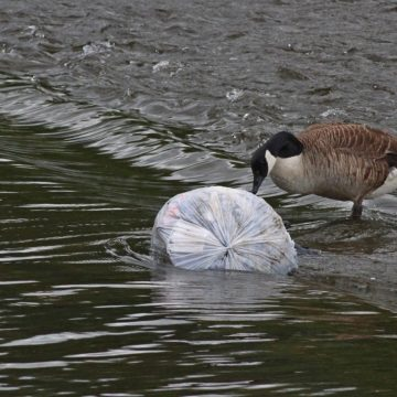 WWF Rings Alarm Bells on Albania's Plastic Pollution