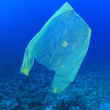 Single-Use Plastic Bags Ban Enters into Force in Albania