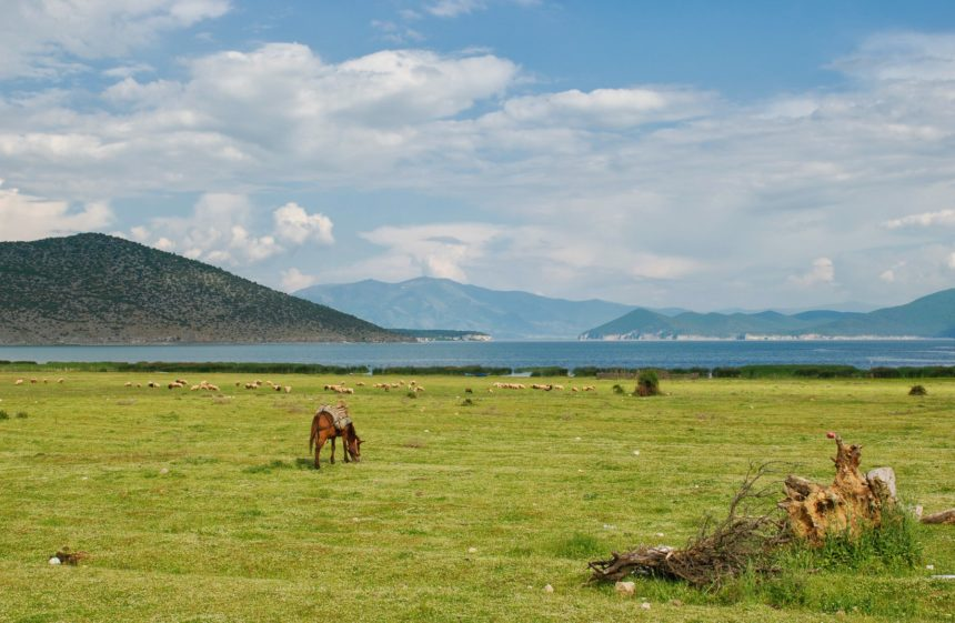 Joint Call for Grant Proposals for Environmental Actors on Prespa
