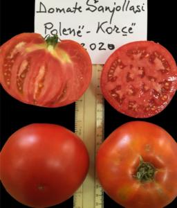 Sanjollasi Tomato