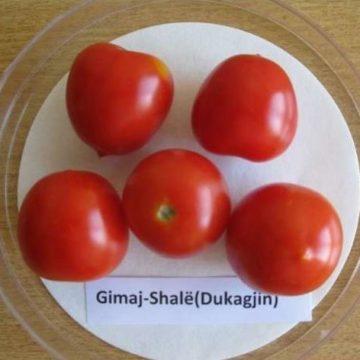Shala tomato