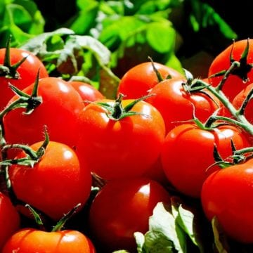 Tomatoes, a Rising Star in Made in Albania Exports