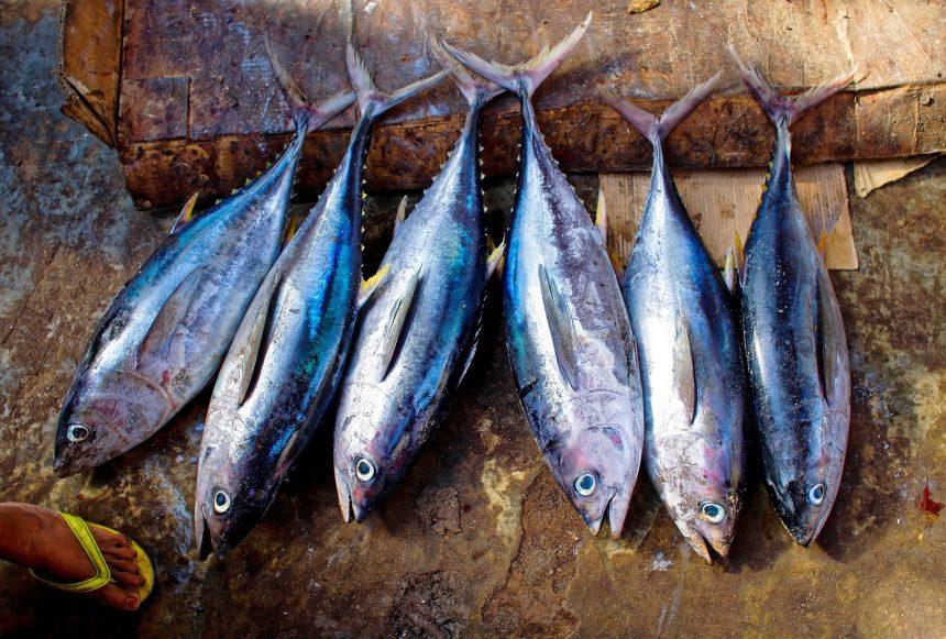 Tuna Fishermen to Enjoy Double Catch Quotas in 2018