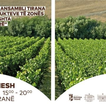 Wine in Shesh Festival to Gather Wine Lovers in Ndroq