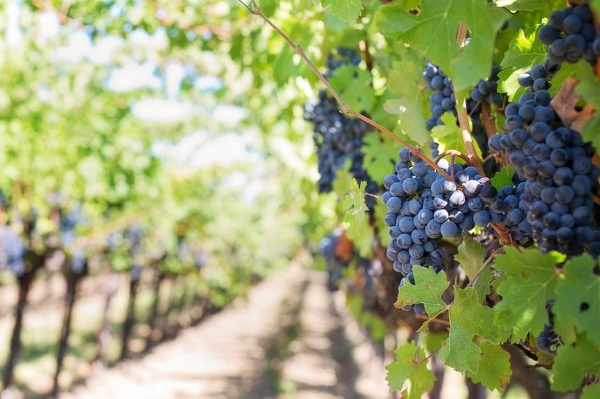German Govt to Support Albanian Agriculture and Viniculture